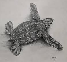 limited edition leatherback sea turtle hatchlin folksy