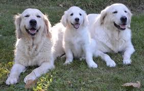 Dog Blinds Blinds Free Pictures On Pixabay