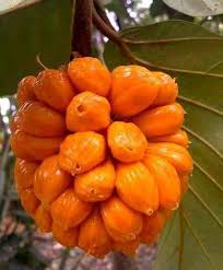 buy fruit online 61 best buy fruit plants online india images on fruit