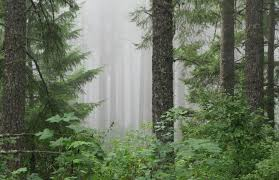 Oregon forest images June 23rd quot forest walk talk and learn quot treetopics jpg