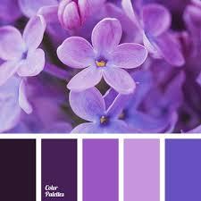 lilac color color palette 2969 color palette ideas
