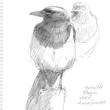 drawing the motmot u2013 nature art and everything