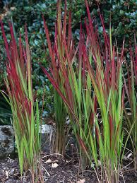 garden design garden design with ornamental grasses design for