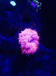 got a rock flower anemone 197625