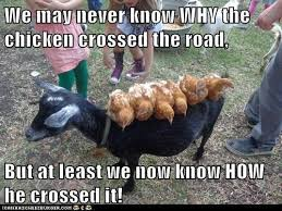 Chicken Memes - 30 most funniest chicken meme pictures that will make you laugh