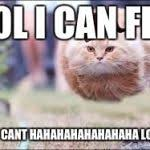 Flying Cat Meme - flying cat ball meme generator imgflip