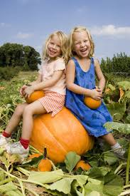 Pumpkin Picking Places In South Jersey by Farms And Orchards