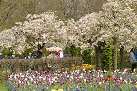 beautiful spring keukenhof park netherlands the most beautiful spring garden in