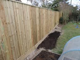 Blackmoor Fruit Trees - shallots out and fruit tree plans two chances veg plot blog