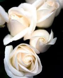 kondolenzsprüche kondolenz angemessen kondolieren und kondolenzschreiben