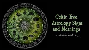celtic tree astrology signs and meanings the minds journal