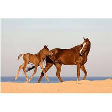 sous cheval bureau sous cheval publicitaire publicitaire personnalisé