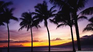 sunset palm trees wallpaper 52dazhew gallery