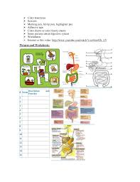 example of planning lesson digestive system