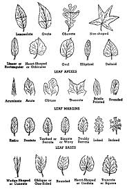 72 best forest plants identification images on plant