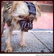 Halloween Costume Ideas For Pets Halloween Costume Ideas For Dogs Muzzles Google Search