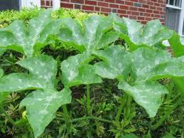Plant Diseases Identification - plant disease identification plant diseasejpg vegetable