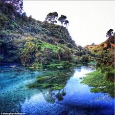 Clearest Water In The Us New Zealand U0027s Blue Spring Where Crystal Clear Water Takes 100
