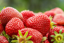 berries superfood saturday the leaf nutrisystem blog