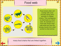 3rd grade science glossary 2 ipad app learn and practice