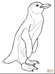 surprising galapagos penguin coloring page with penguin coloring