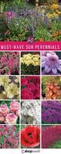 best 25 sun garden ideas on pinterest full sun garden full sun