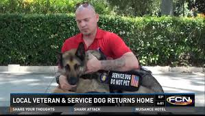 australian shepherd service dog service dog of the year denied boarding on american airlines dogtime