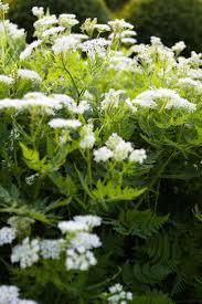 edible california native plants 44 best garden images on pinterest native plants flower borders