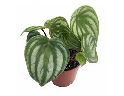 indor plants best winter indoor plants to brighten up your home first for women