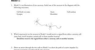 nervous stations worksheet google docs