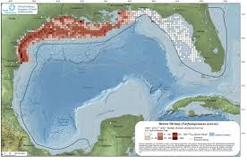 Gulf Of Mexico On Map by Interview The Unfolding Story Of Bp Disaster U0027s Impact On Gulf