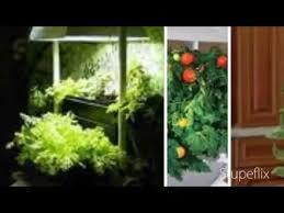 Indoor Garden Supplies - indoor gardening supplies salem oregon youtube