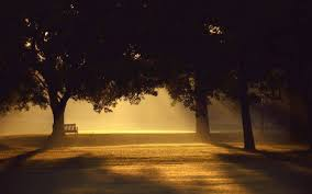 Bench Photography Trees Sunlight Mist Photography Bench Sunset Wallpapers Hd
