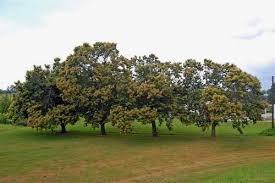 chestnuts hendersonville nc