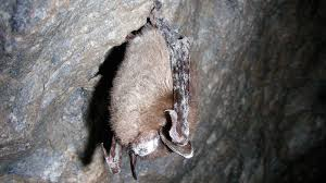 7 facts about bats in honor of national bat week national parks