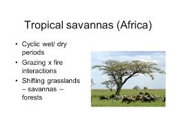 Tropical Savanna Dominant Plants - fire regimes and the world u0027s biomes 23 september ppt download