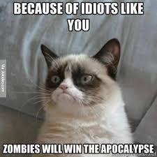 Cat Internet Meme - because of idiots like you grumpy cat meme