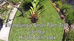 palm tree removal a hi lift farm