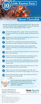 infographics 10 known facts about clownfish home aquaria