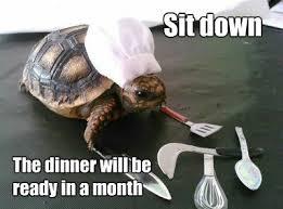 Meme Chef - turtle chef meme by soydolphin memedroid