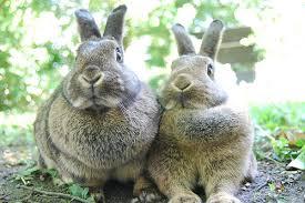 rabbit rabbit rabbit preso a gallery on flickr