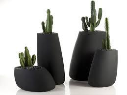 vasi decorativi piante vaso piante da terrazzo migliori piante da vaso