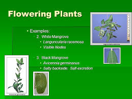 multicellular primary producers seaweeds and plants ppt video