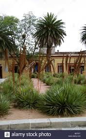 yucca filamentosa plants and palm trees in the gardens outside the