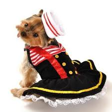 Halloween Costumes Yorkies Dogs 22 Dog Costumes Images Dog Costumes Pet