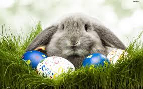 big easter eggs big gray rabbit defends easter eggs hd wallpaper