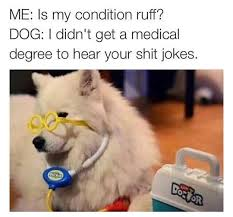 Dog Doctor Meme - life at rusvm