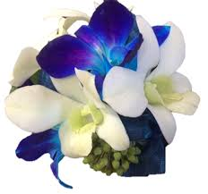 blue orchid corsage blue orchid wrist corsage bloomin boxes flower gift boxes and
