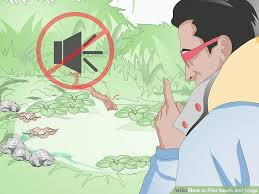 how to find newts and frogs 10 steps with pictures wikihow