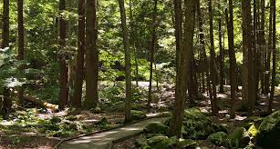 New Jersey Forest images Park highlight welcome to stokes state forest in new jersey jpg
